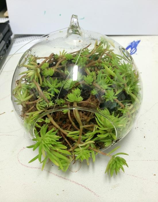 Best And Closed Terrarium Plants For Sale Northroy Nursery