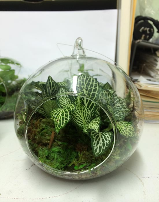 Best And Closed Terrarium Plants For Sale Northroy Nursery